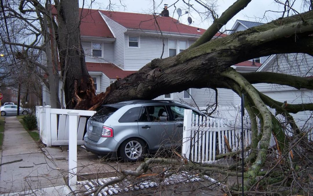 Storm Damage in Virginia